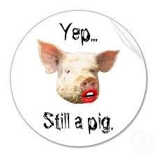 Blog Post - Pig