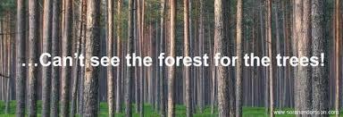 Blog Post - Forest